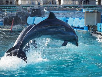 【2019】名古屋港水族館のチケット料金はいくら?通常料金・夜間料金・周辺施設とのセット料金まとめ!