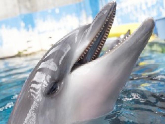 【神戸の観光地】須磨海浜水族園徹底ガイド!入園料・園内施設・飼育動物・各種イベントまとめ!