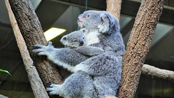 【2019】東山動物園の駐車場まとめ!無料の駐車場・台数の多い駐車場・その他注意点!