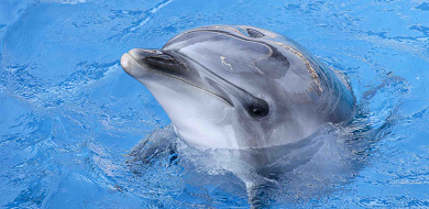 【水族館】うみたまごの割引クーポンまとめ!大分県の最新スポットを安い料金で楽しもう!