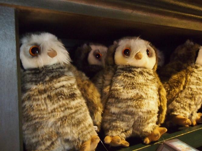 【ハリーポッター】フクロウを種類別に解説!ヘドウィグはハリーのふくろう♪