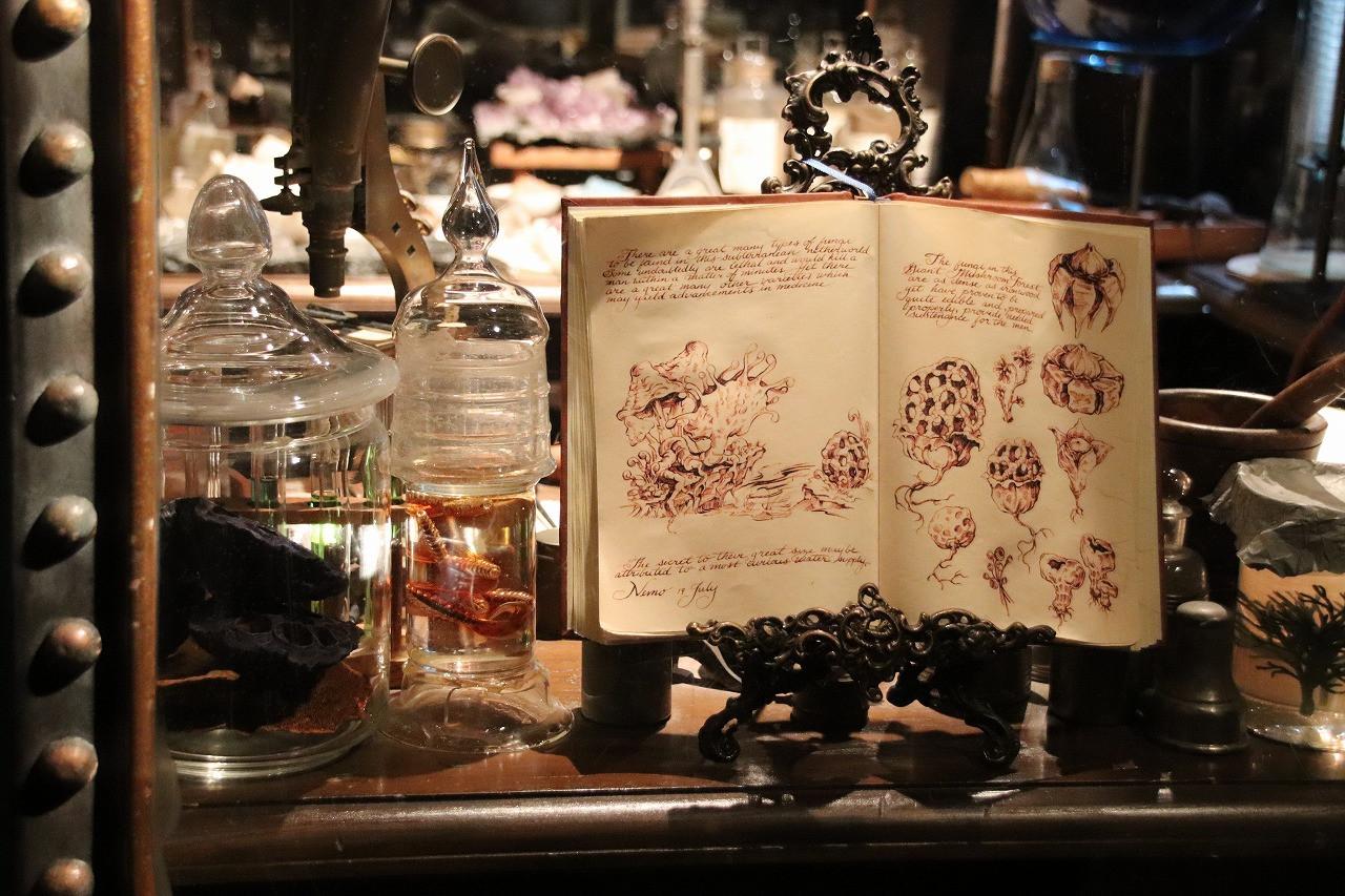 発光生物とキノコの標本