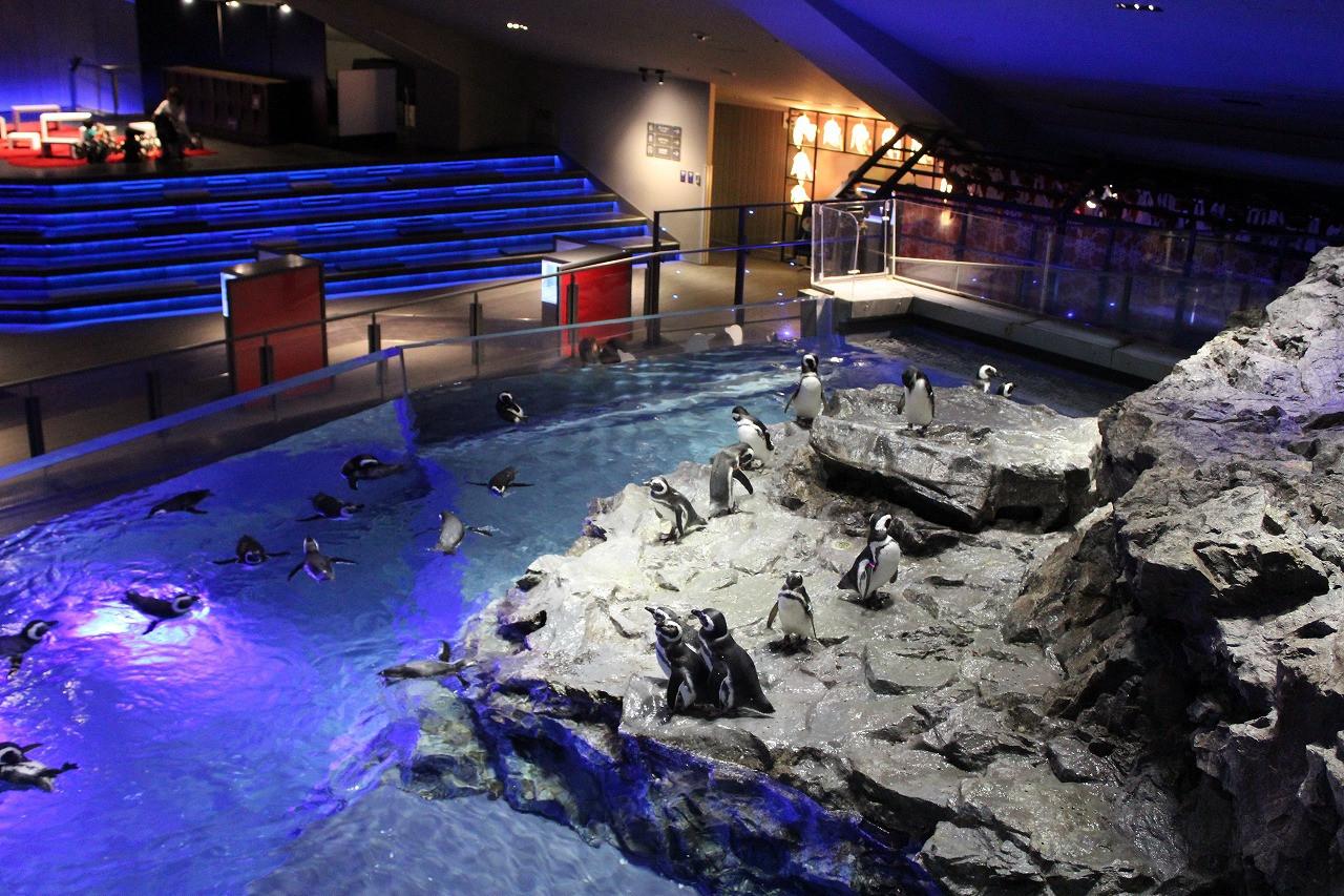 ペンギンの水槽