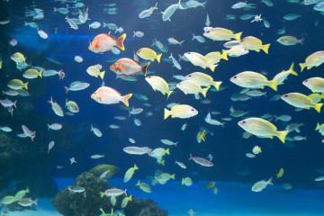 【2019】サンシャイン水族館の混雑は?平日&土日祝・長期休みの混み具合・特に混雑する人気スポットまとめ!
