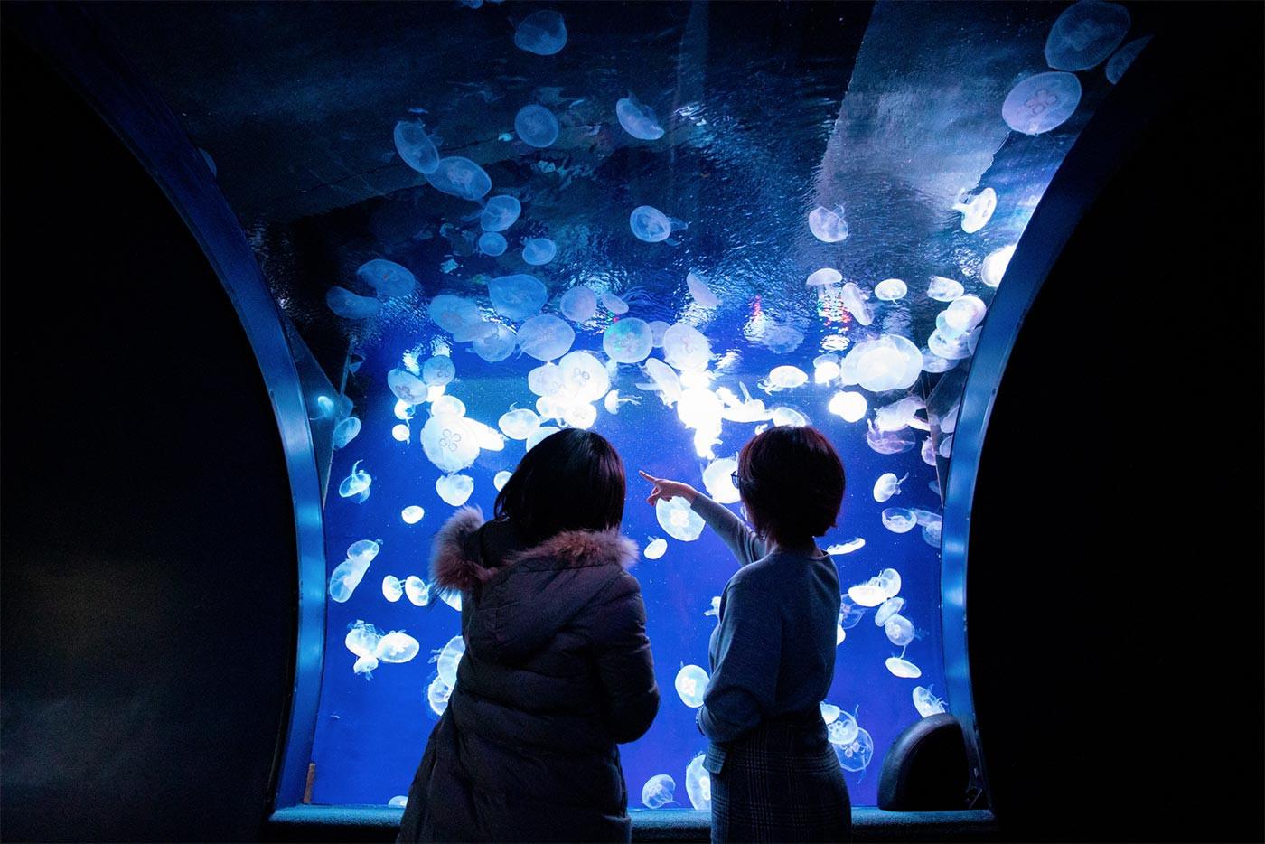 クラゲの展示場所「ふわりうむ」
