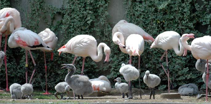 多摩動物公園は、飲食物の持ち込みができる