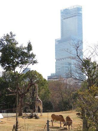 天王寺動物園:【おすすめ①】都会にある動物園