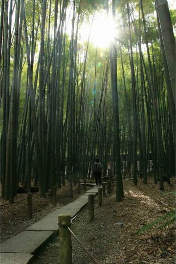 【鎌倉】竹林が美しい報国寺の魅力を紹介!歴史、見どころ、アクセス、拝観方法まとめ